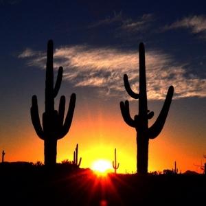 Organ Pipes National Monument Arizona
